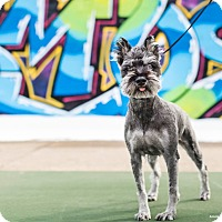 Adopt A Pet :: Everett - Chicago, IL