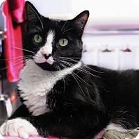 Adopt A Pet :: Megatron - Bellevue, WA