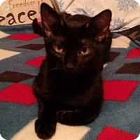 Adopt A Pet :: Cauldron - Seminole, FL