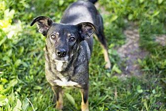 German Shepherd Dog Mix Dog for adoption in Salt Lake City, Utah - Audi