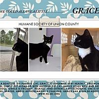 Adopt A Pet :: Grace - Monroe, NC