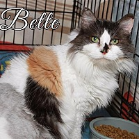 Adopt A Pet :: Bette - Fall River, MA