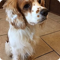Adopt A Pet :: Newton - Sugarland, TX