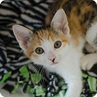 Adopt A Pet :: Cora - Greenwood, SC