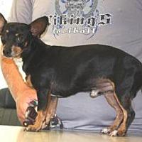 Adopt A Pet :: Mulder - Sparta, NJ