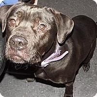 Adopt A Pet :: Ian - Clinton, ME