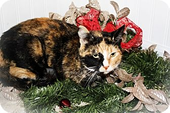 Calico Cat for adoption in Hampton, Illinois - Bailee