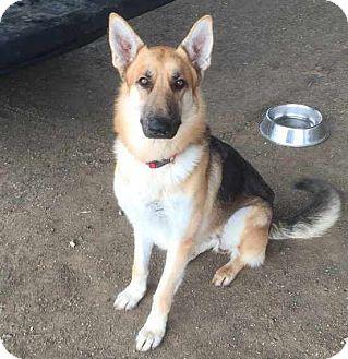 German Shepherd Dog Dog for adoption in Pleasant Grove, California - Zero