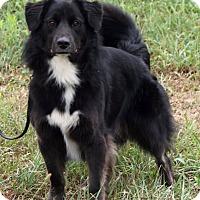 Adopt A Pet :: Alfie - Lebanon, CT