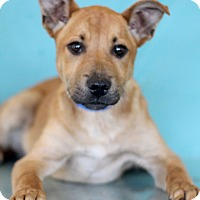 Adopt A Pet :: Talking Heads - Waldorf, MD