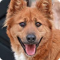 Adopt A Pet :: Willa von Wildau - Los Angeles, CA