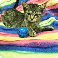 Adopt A Pet :: Basil - Jackson, TN