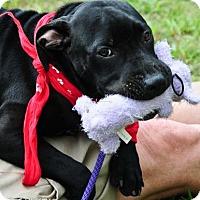Adopt A Pet :: Raven - Atlanta, GA