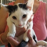 Adopt A Pet :: Buster - Fresno CA, CA