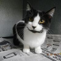 Adopt A Pet :: Frank - Pasco, WA