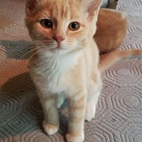 Adopt A Pet :: Tuna - Allentown, PA