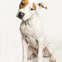 Adopt A Pet :: McGee - Baton Rouge, LA