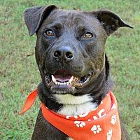 Adopt A Pet :: Ella Grace - Raleigh, NC
