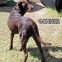 Adopt A Pet :: Gunner (Ritzy) - Lindsay, CA