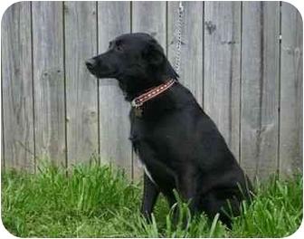 Boston Terrier Dog for adoption in Muldrow, Oklahoma - Jenny