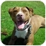 Photo 3 - American Pit Bull Terrier Mix Dog for adoption in Berkeley, California - Jody