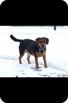 Hound (Unknown Type) Mix Dog for adoption in Richmond, Virginia - LuLu