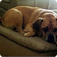 Adopt A Pet :: Sampson - Austin, TX