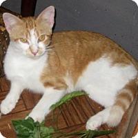 Adopt A Pet :: Cass - Dallas, TX