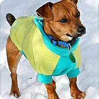 Adopt A Pet :: YOSHI - Hastings, NY
