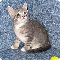 Adopt A Pet :: Cooper - Harrisburg, NC