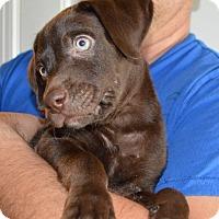 Adopt A Pet :: Billee-adoption in progress - Marshfield, MA