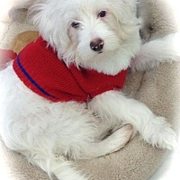 Adopt A Pet :: Joey - La Habra Heights, CA