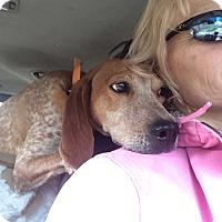 Adopt A Pet :: Tulip - Bakersville, NC