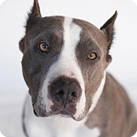 Adopt A Pet :: Loretta - LOS ANGELES, CA