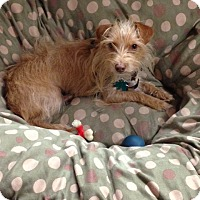 Adopt A Pet :: Meisha B - Alpharetta, GA