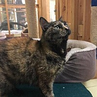 Domestic Shorthair Cat for adoption in Leonardtown, Maryland - Esmerelda