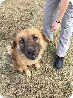 Australian Shepherd/Shepherd (Unknown Type) Mix Dog for adoption in Jackson, Georgia - Maggie