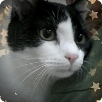 Adopt A Pet :: Christian - Trevose, PA