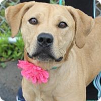 Adopt A Pet :: MISSY - Clayton, NJ