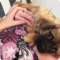 Adopt A Pet :: Roxy - Dawson, GA