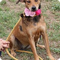 Adopt A Pet :: Pebbles & BamBam - Lacey, WA