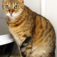 Adopt A Pet :: Khenda - Encinitas, CA