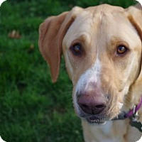 Adopt A Pet :: Gracie - Cedar Rapids, IA
