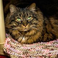 Adopt A Pet :: Buttons - Rockville, MD