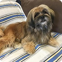 Adopt A Pet :: 'CHAMP' - Agoura Hills, CA