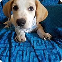 Adopt A Pet :: Sonny (see video) - Burlington, VT