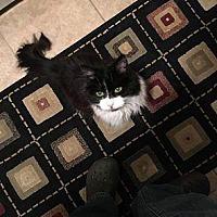 Adopt A Pet :: Buttercup - Mount Laurel, NJ