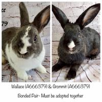 Adopt A Pet :: *WALLACE - Camarillo, CA