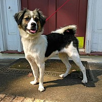 Adopt A Pet :: Bailey - West Springfield, MA
