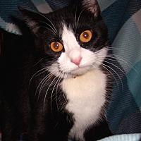 Adopt A Pet :: Dorothy - Metamora, IN